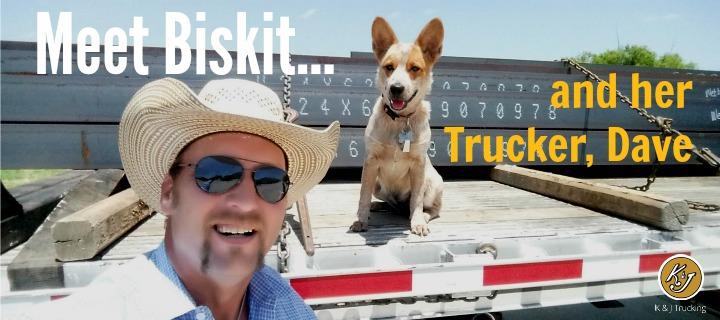 Furry co-pilot, trucking, trucker