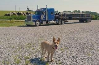 Biskit-and-truck.jpg