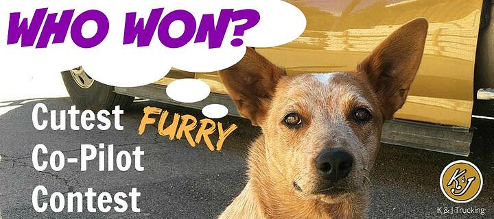 Furry-Co-Pilot-Winner.jpg