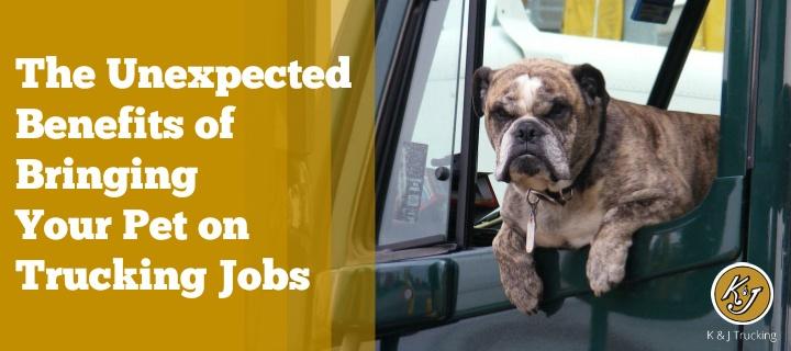 Pet-On-Trucking-Jobs.jpg