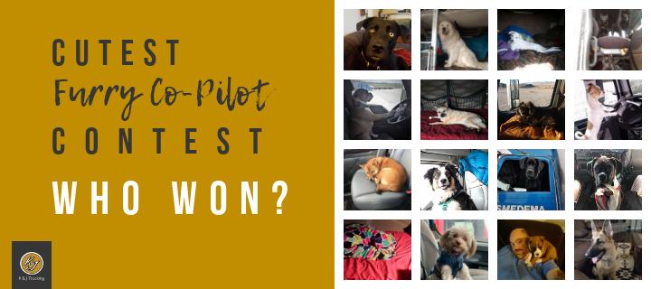Cutest Furry Co-Pilot Contest Winner
