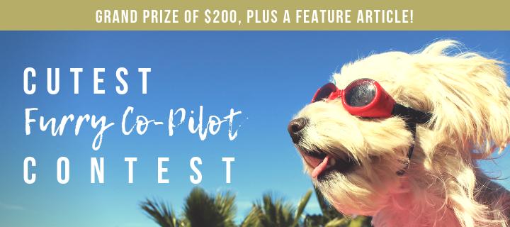Final Cutest Furry Co-Pilot - blog header no buttom