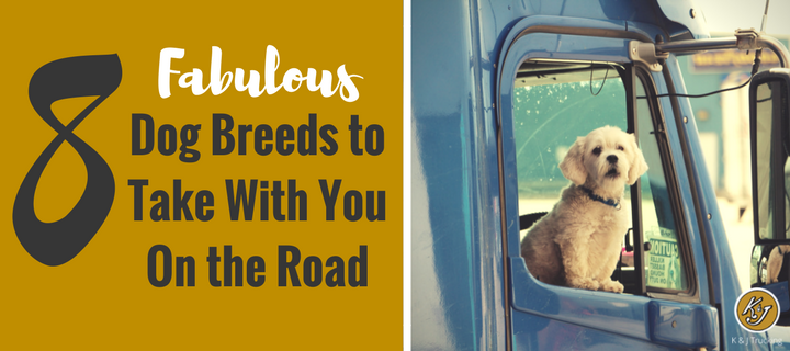 8 Fabulous Dog Breeds to Take With You On the Road.png